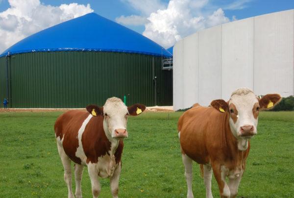 Biomassa & Biogas